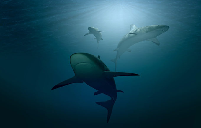 morski-pas